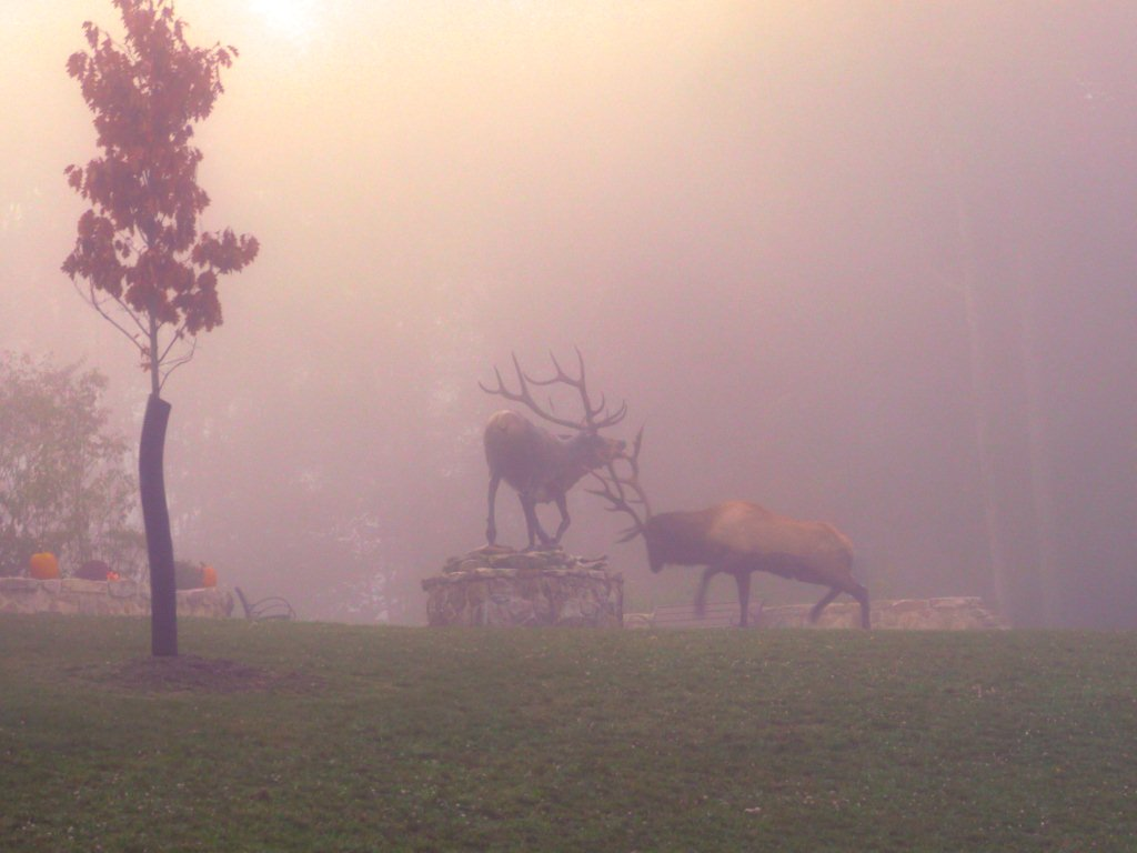 A remarkable photo, in which a bull elk mistakes a bronze statue for a rival and attacks. Nature and culture, together again.