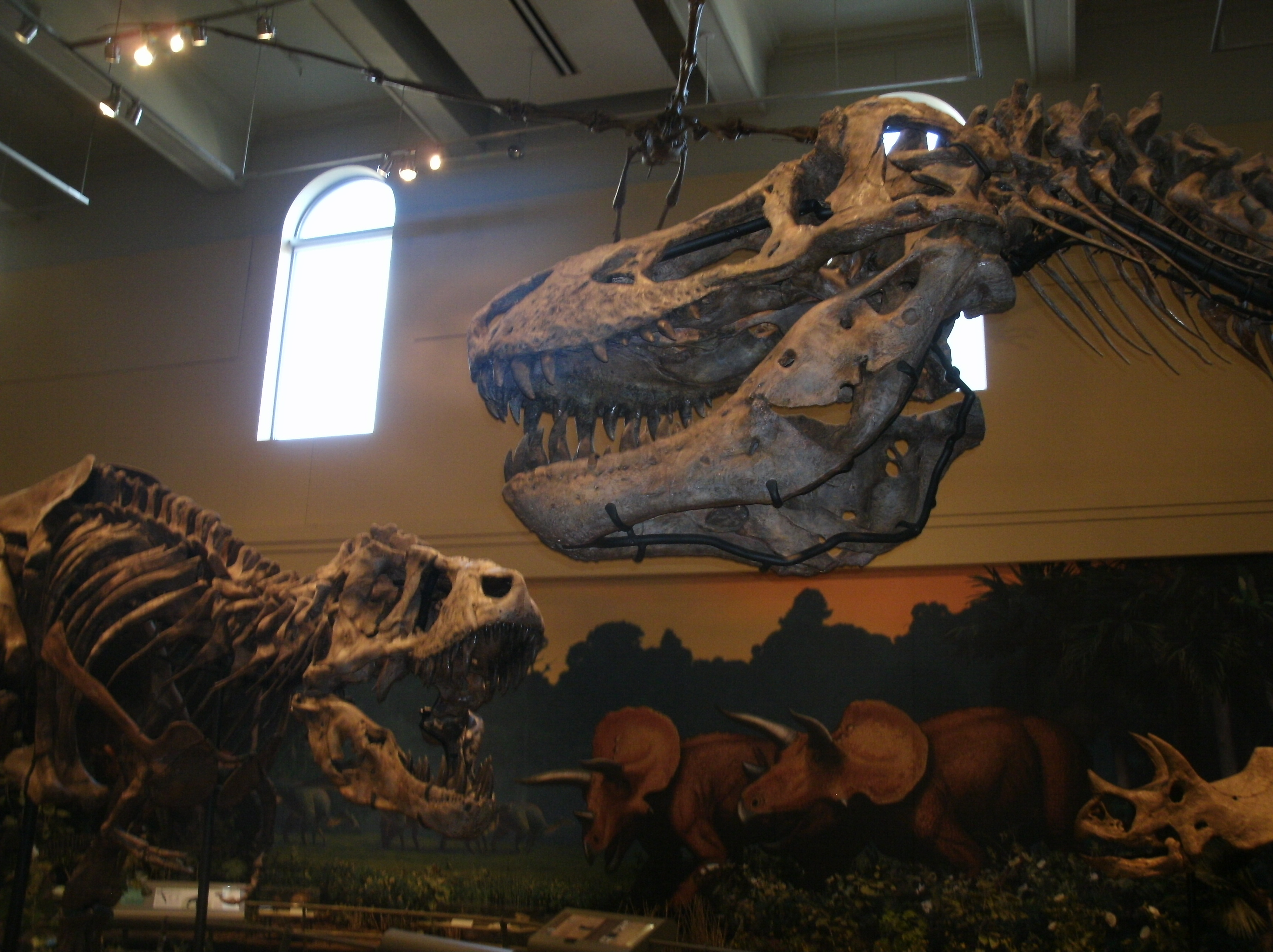 "The Carnegie Museum not only has T. rex skeletons; it has THE T. rex skeleton, the holotype, the skeleton example from which Tyrannosaurus rex (""tyrant lizard king"") was named back in 1905."